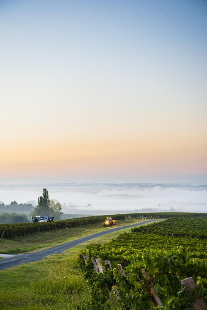 vignes et vin de bordeaux