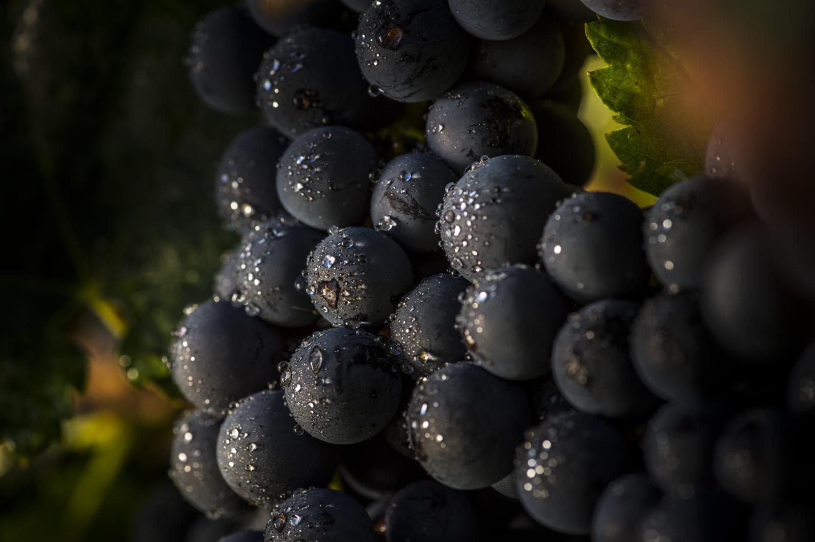 nos vins réservations