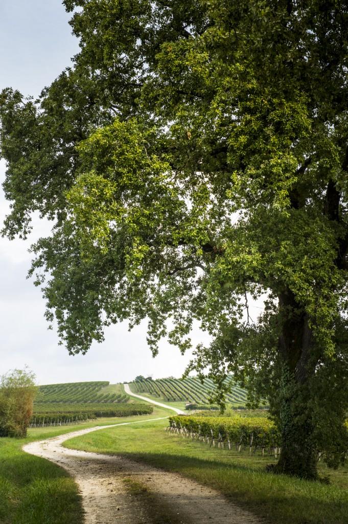 vins de Bordeaux - vignes du bordelais